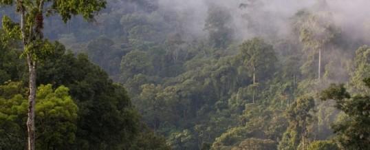 """Tag des Waldes (21.3.): Krüger: """"Naturschutz ist eine Frage der globalen Gerechtigkeit"""" / NABU und BMZ unterzeichnen """"Kompetenzpartnerschaft Natur"""""""